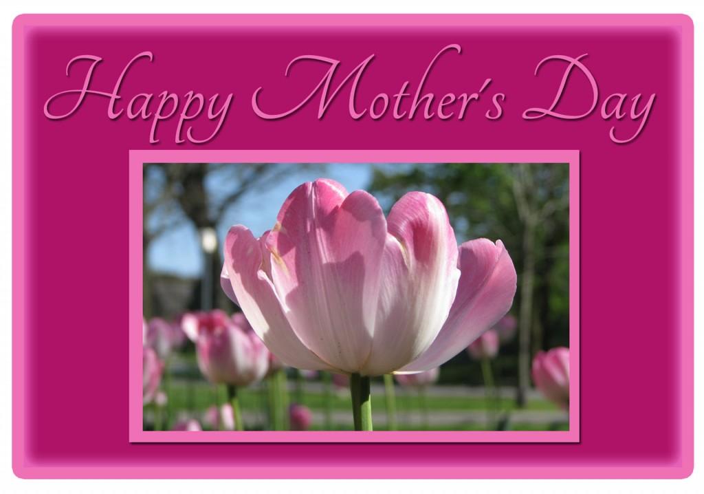 pink tulips in Victoria Park